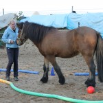 .Demonstration wie man ein Pferd ohne Hilfsmittel in einen abgegrenzten Raum bekommt