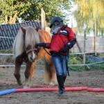 DAs Pferd spiegelt oft den Patienten